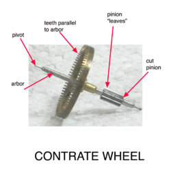 contrate wheel ann.jpg